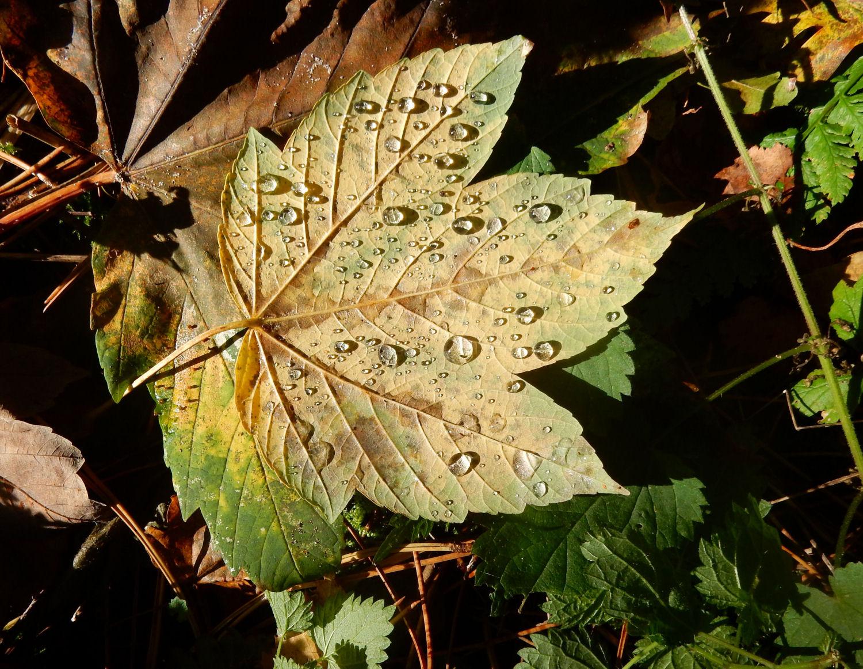 Herfstverschijnselen, Nut En Noodzaak