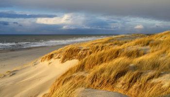 Digitale Excursie Door De Duinen Van Texel, IVN